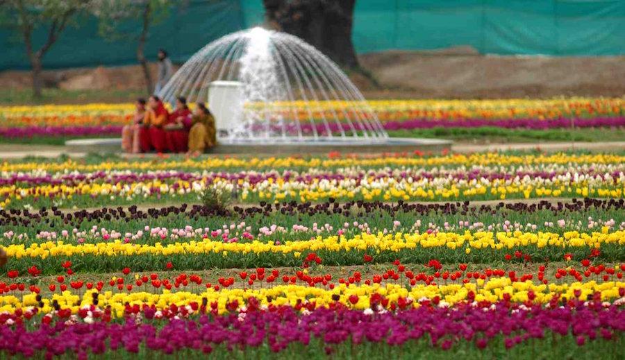 26-tulips