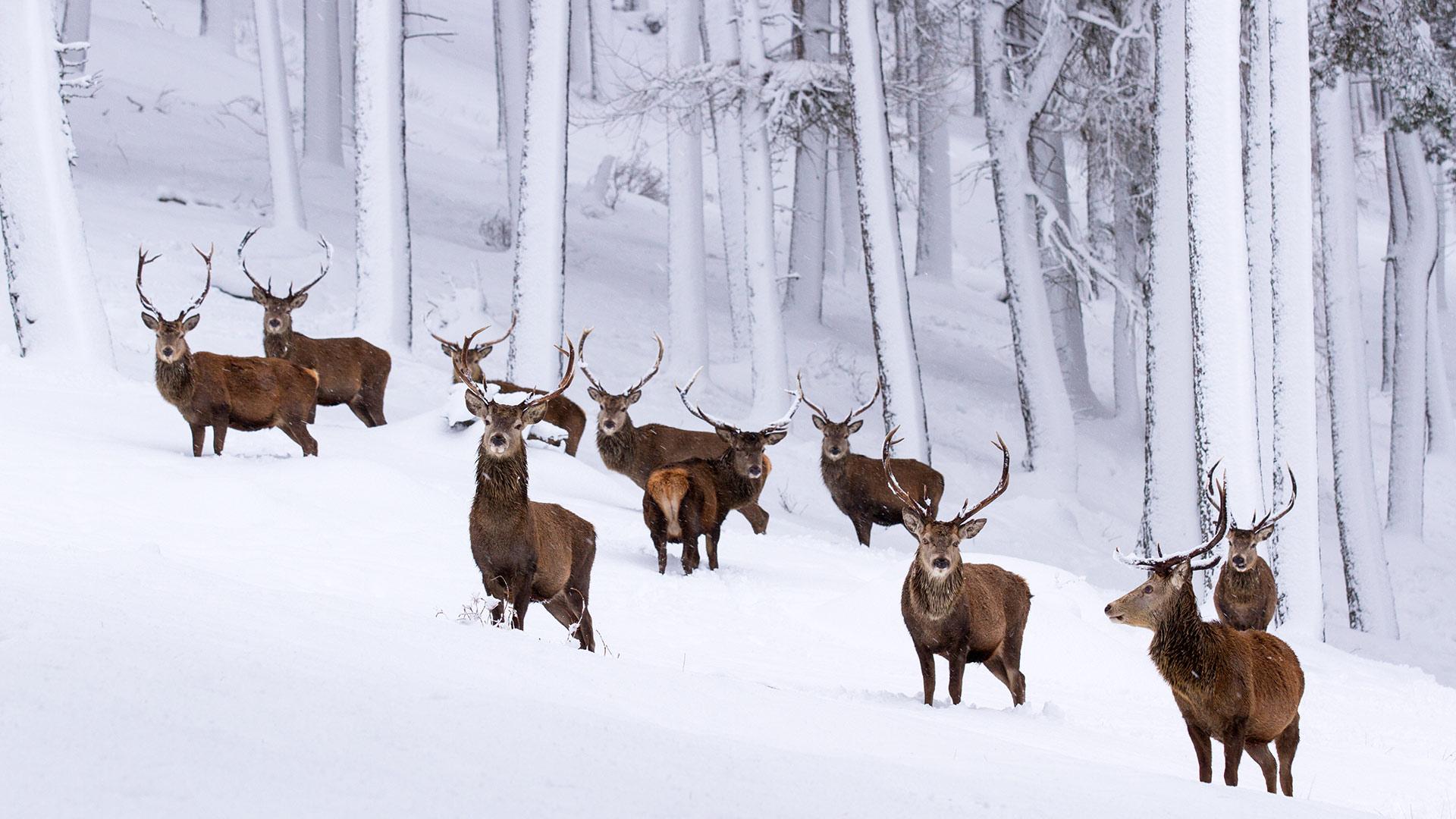10 destinasi terbaik di United Kingdom ketika percutian di Musim Sejuk