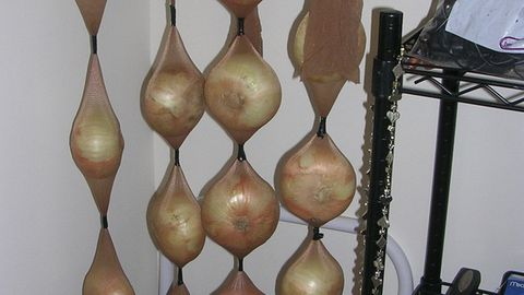 Onions in tights