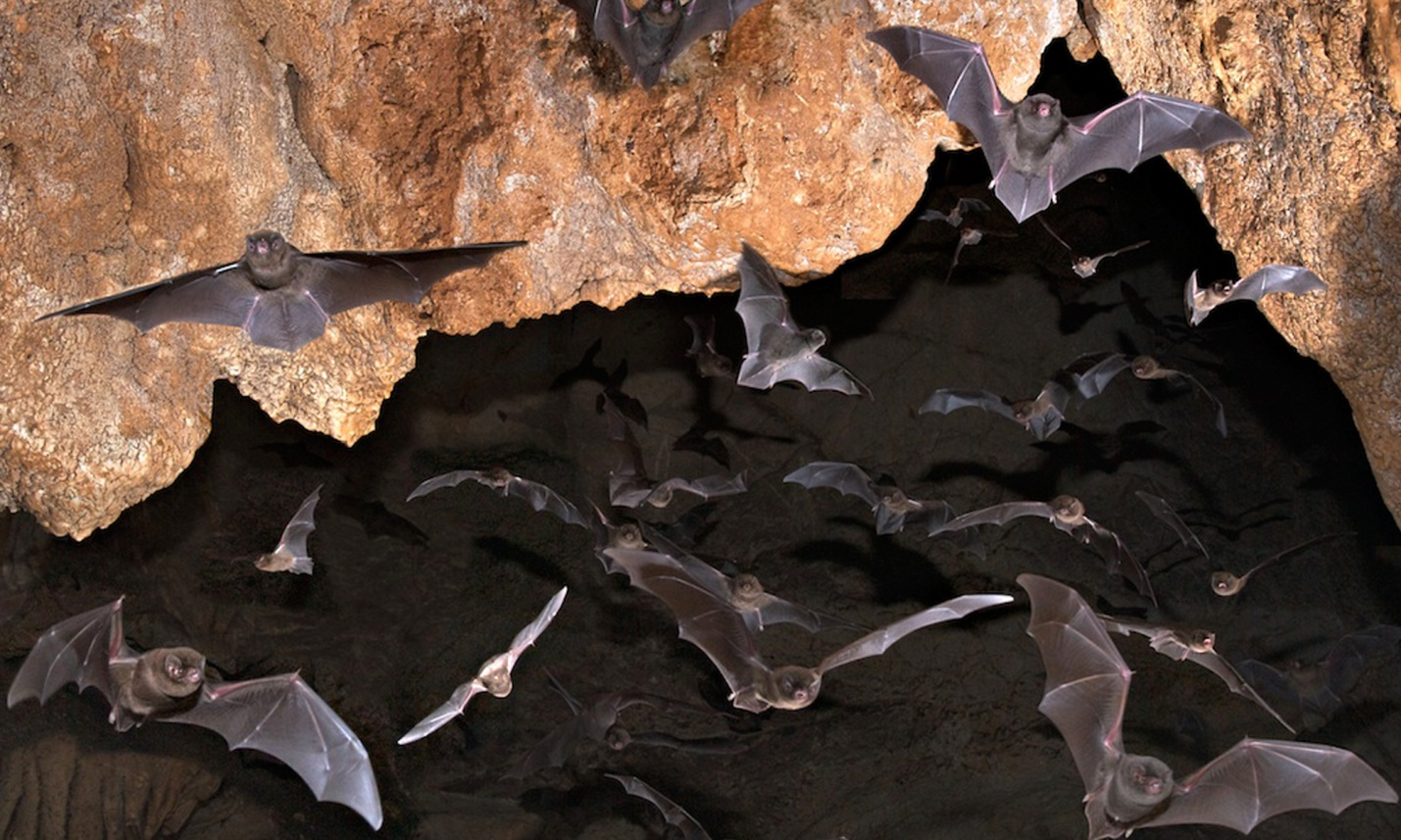 Image result for bats habitat
