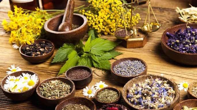 Ubatan Ayurveda sebagai herba untuk meningkatkan penyusuan badan