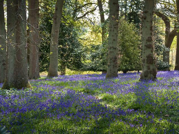 12 perjalanan sehari dipenuhi bunga dari London yang menakjubkan