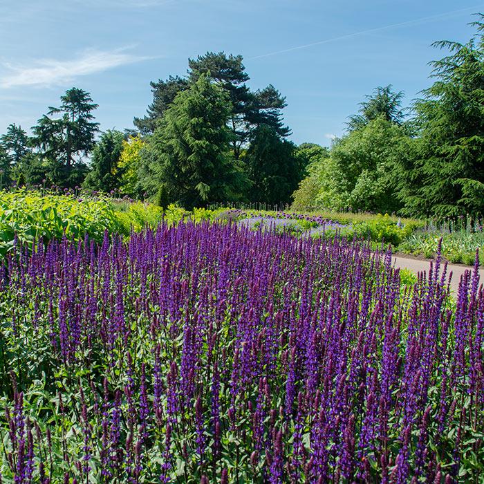 10 lokasi rahsia Ladang Lavender di UK ketika bercuti pada musim panas