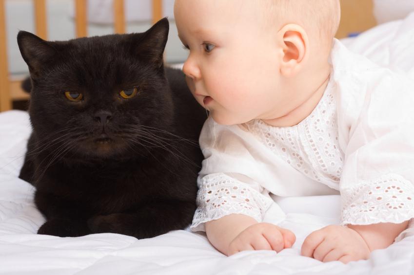 Haiwan peliharaan dan risiko terhadap kesihatan si kecil anda