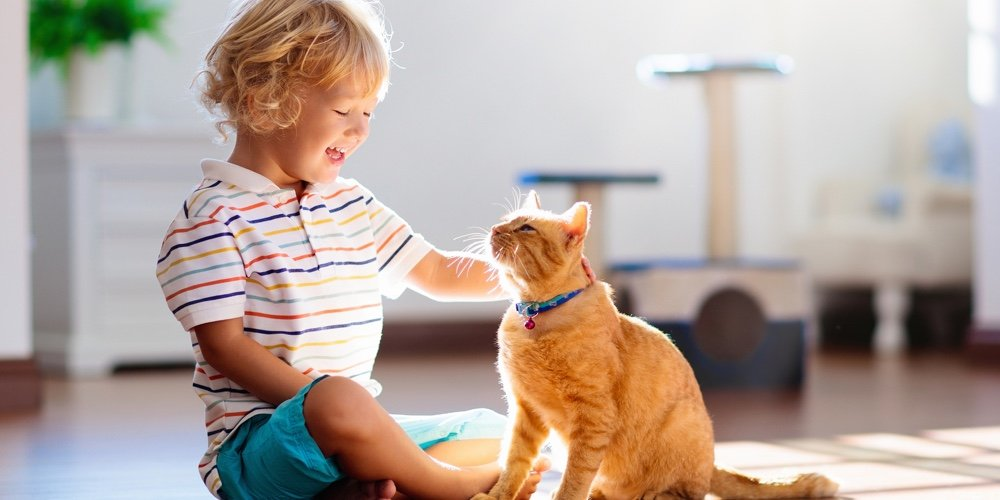 Child Playing With Cat At Home. Kids And Pets. - CUInsight